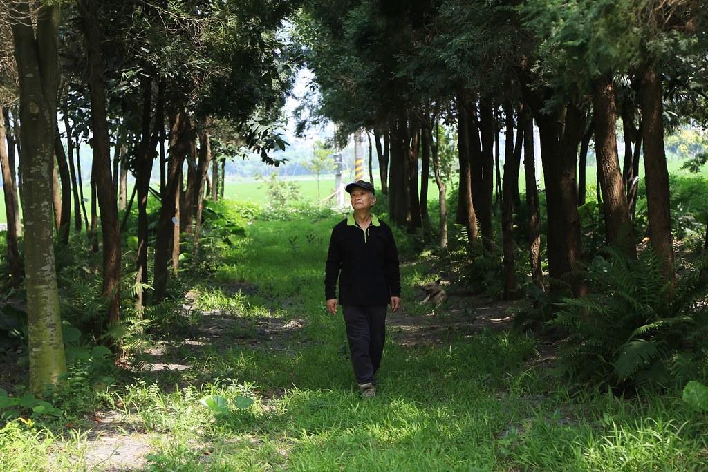 吳晟在兩甲地上種了上千台灣原生種樹木,如今已綠蔭成林。攝影:林明樺。