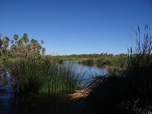 Estero San jose