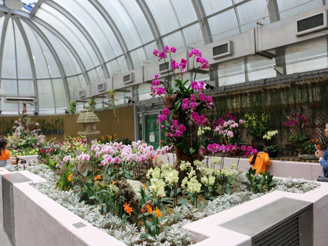 gradina zoologica si botanica obiective turistice gratuite Hong Kong 3