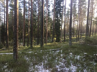 January in Nordmarka