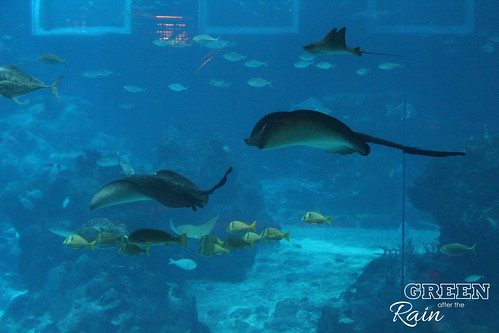 160908d Maritime Museum and SEA Aquarium _236