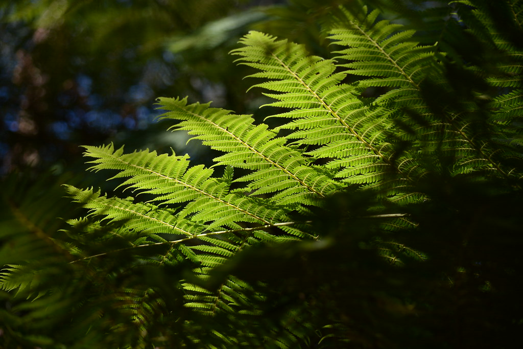 Kallista | Dandenong Ranges, Victoria | Ingrid Van Streepen | Flickr