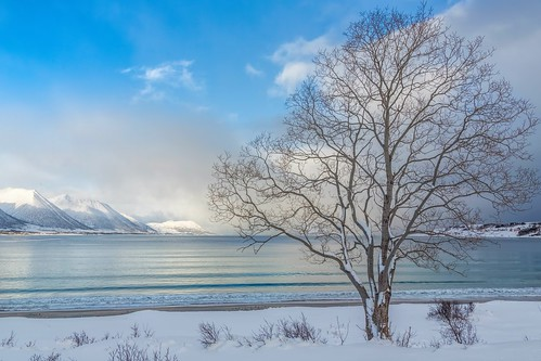 Tree at Godfjord. Epic Photos from Northern Norway by Benny Høynes