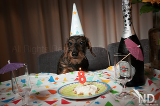 Ollie's 8th Birthday 14-08-2015 | by ND-Photo.nl