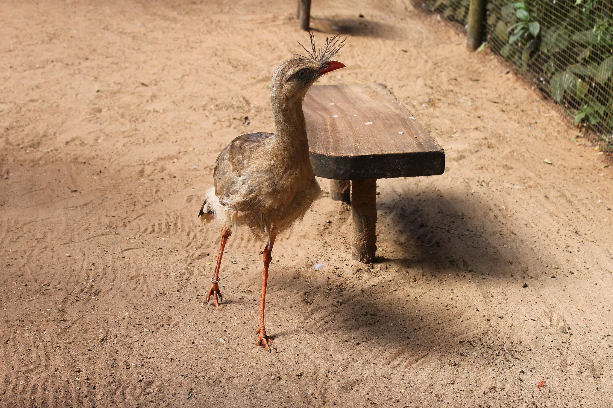 parque-das-aves18