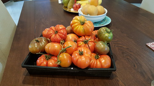 The first of our tomato crop - Black Russians, Heirlooms, and Grosse Lisse! They taste fantastic!