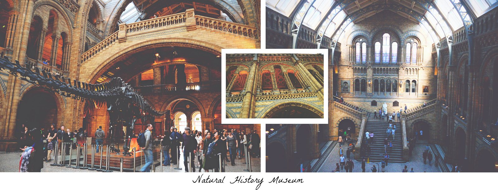 Natural History Museum, London | via It's Travel O'Clock