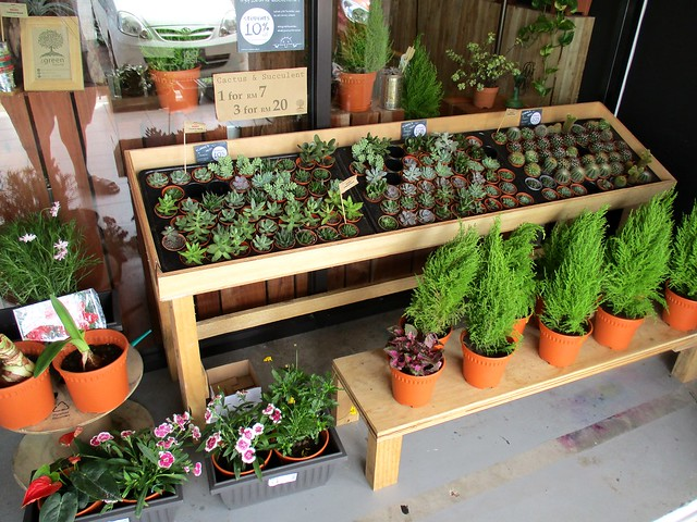 More plants for sale