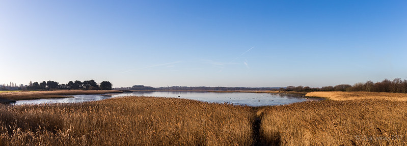 Lychett Bay from the viewing platform