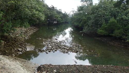 Pasir Ris Mangroves after oil spill in the Johor Strait, Jan 2017