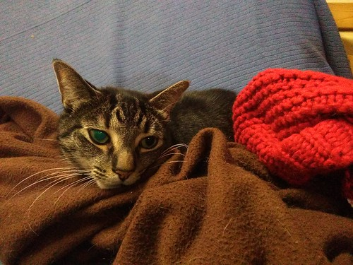 Shakespeare in blankets, eye aglow #toronto #Shakespeare #cats #catsofinstagram #caturday