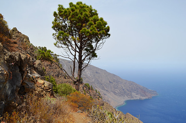 Brown El Hierro in August