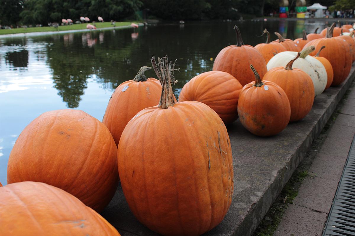 Kürbisse auf dem Herbstmarkt im Westfalenpark
