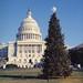 1973 U.S. Capitol Christmas Tree