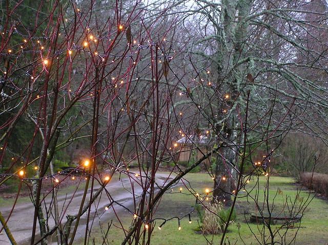 Rainy New Year Morning