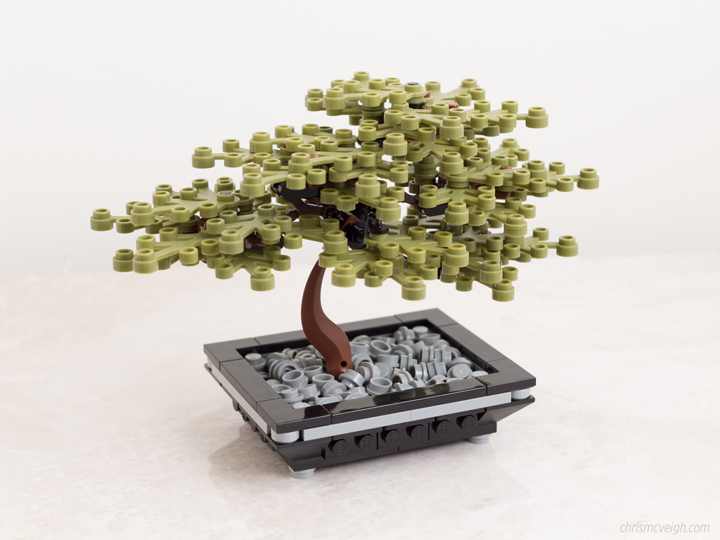 The Emperor Bonsai