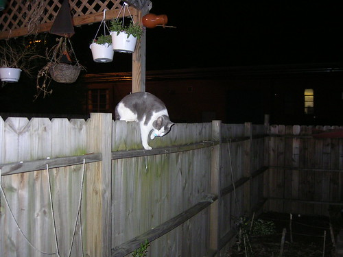 how to stop cats from coming in yard