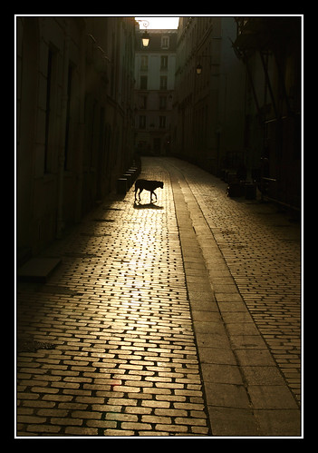 The dog of the baskerville | by cabstiv