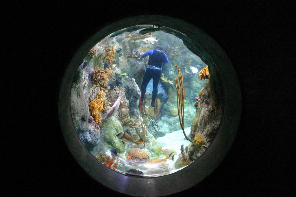 Aquarium In Albuquerque