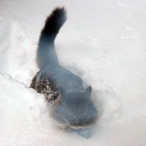 Angry Cat In Snow Taken Through The Screen Door Because