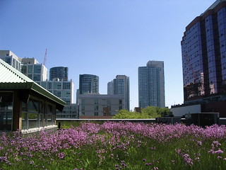 MEC's green roof among others | by 416style