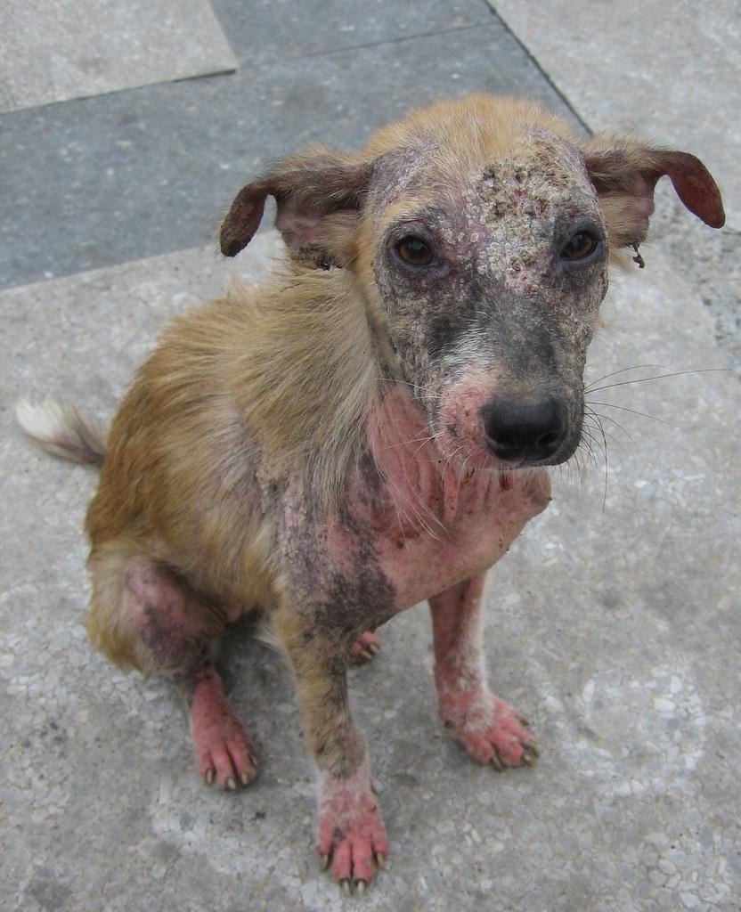 Scabby Dog I Met This Interesting Creature In Havana