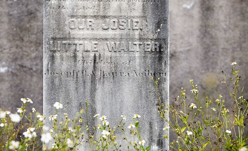 Josie and Little Walter | by Thomas Hawk