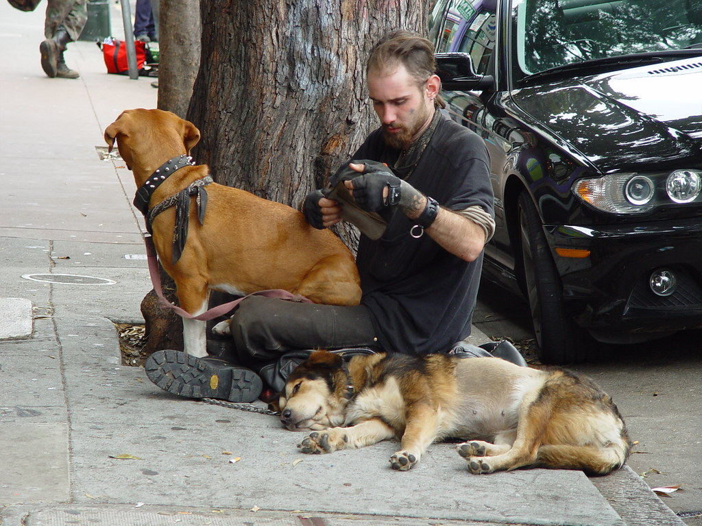Man Dogs Train
