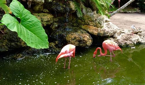 Flamingo Gardens Ft Lauderdale Sue Slick Flickr