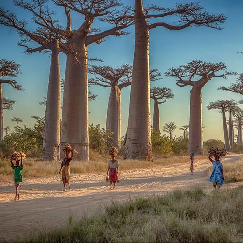 Madagascar-WEB-GettyImages-457994417-600x600