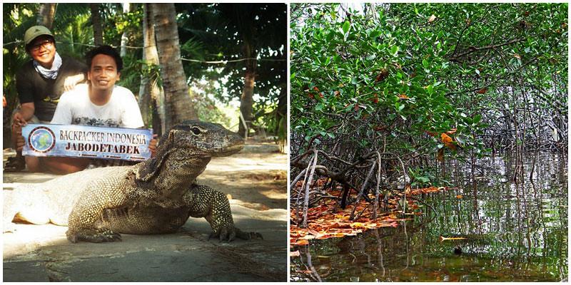 2-Pulau-Biawak-Mangrove