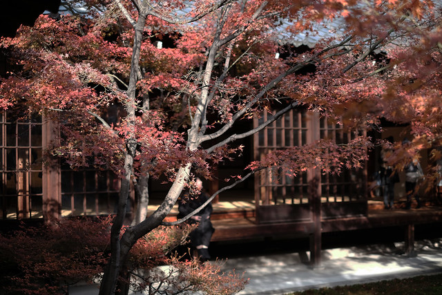 Autumn at the trace2@Kennin-ji, Kyoto