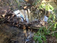 Old Bridge on Frick Creek