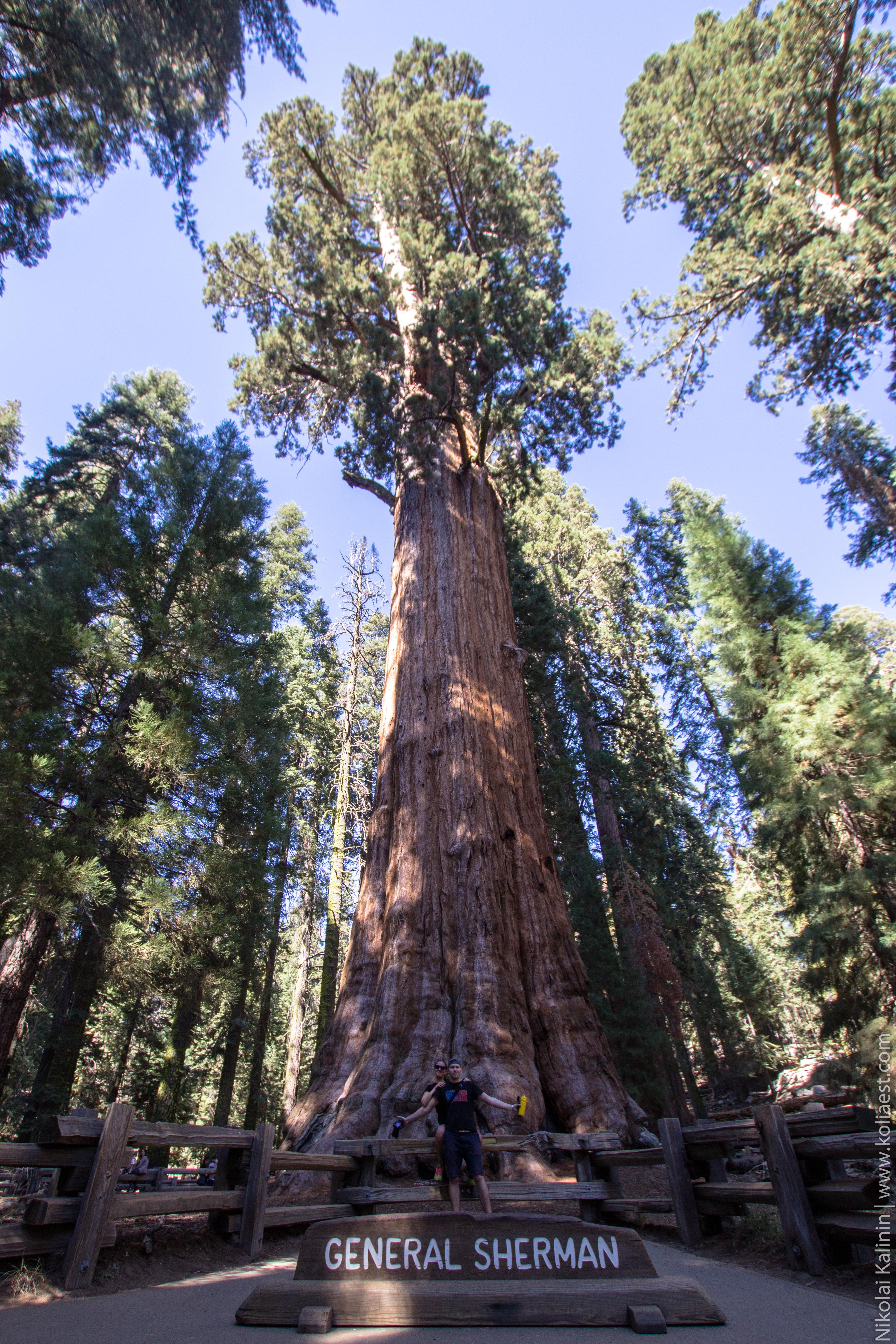 Sequoia-81