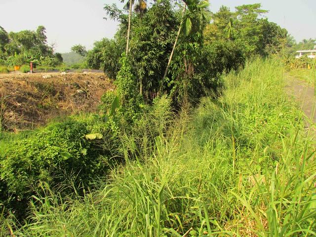 北坑湧泉濱溪林植被和生態系完整,當地居民經常使用湧泉並到竹林採集竹筍。照片提供:李慧宜。