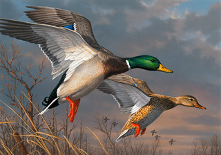 2015 Federal Duck Stamp Contest Entry 074 | by USFWS Headquarters