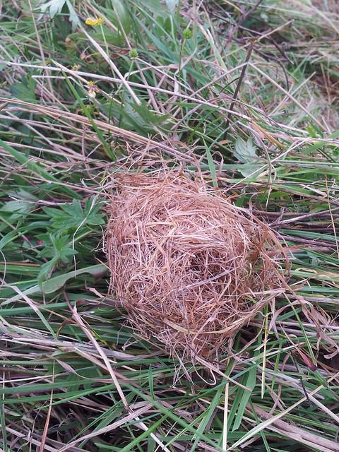 moss carder bee nest