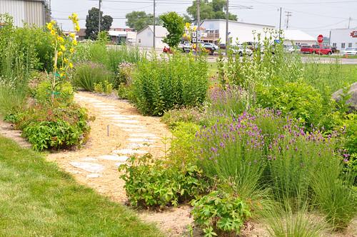 The pollinator garden