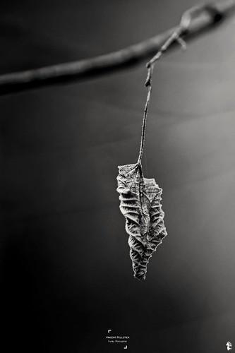 nature black and white art