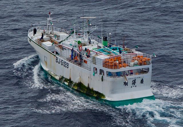台籍漁船「順得慶888號」涉嫌割鰭棄身,已遭漁業署依法辦理。圖片來源:台灣綠色和平組織