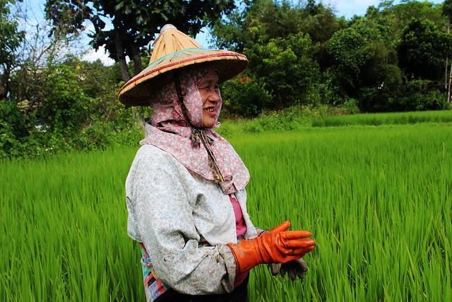 台灣農業人口均齡62歲,農業人力條件比其他國家更嚴苛。攝影:廖靜蕙