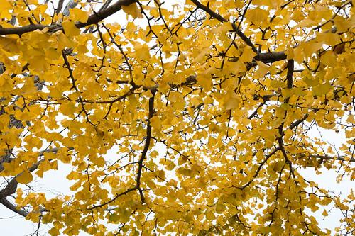 autumn_leaves_2017_07
