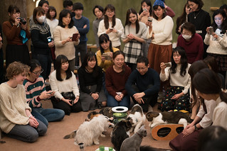 The cats of Temari no Ouchi Cat Cafe てまりのおうち. | by pixelwhip