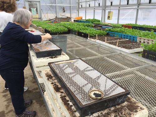 planting onions drumlin farm IMG_0285