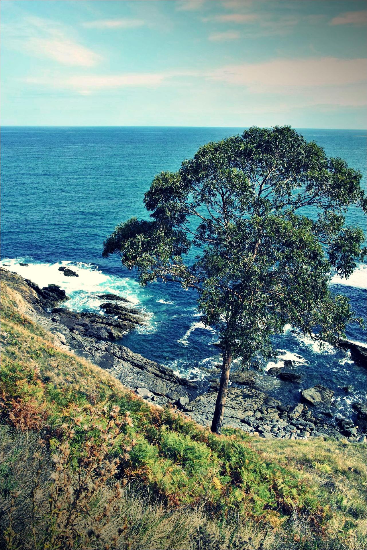 나무-'카미노 데 산티아고 북쪽길. 포르투갈레테에서 카스트로 우르디알레스. (Camino del Norte - Portugalete to Castro Urdiales) '