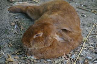 126 Dik konijn