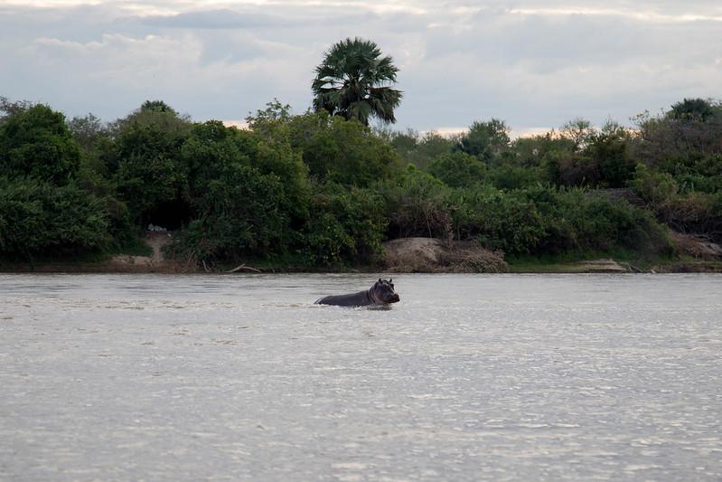 Selous National Park - Tanzania