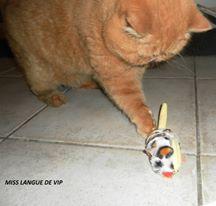 tuto Petite souris à herbe à chat PET BRAND