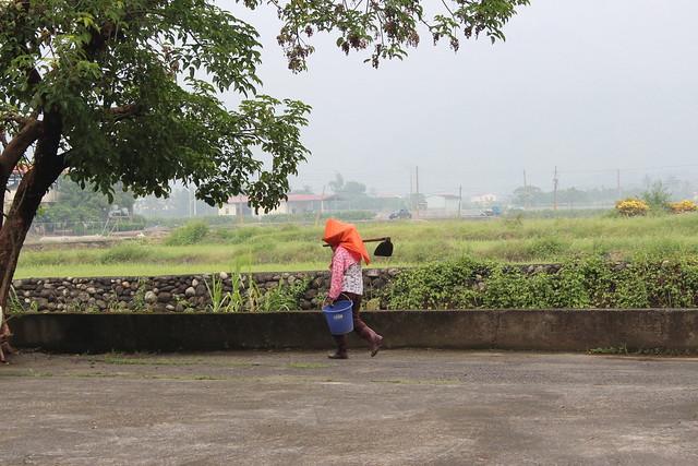 白玉蘿蔔從邊緣地位躍入主流地位,象徵著女性在農業生產的處境。攝影:廖靜蕙