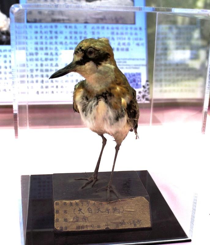 堀川標本特展,重現百年前的物種。攝影:廖靜蕙